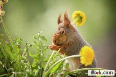 Sarı Çiçek arasında biriket galiba :heart1: