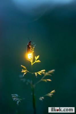 i likes firebugs :applause: