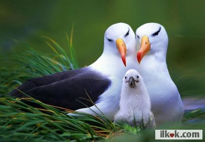 Beautiful bird family  :Smile1: